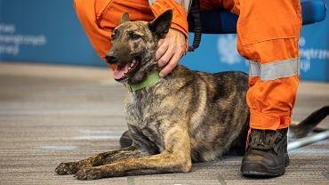 MSWiA z projektem opieki dla zwierząt w służbie. 'Etyczny obowiązek' (fot. MSWiA)