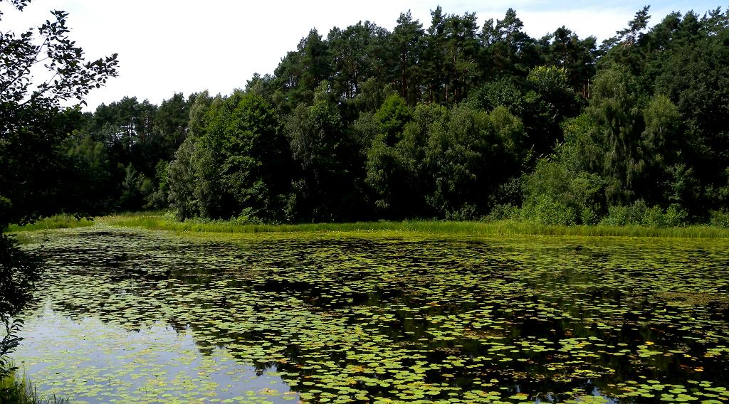 Jezioro Chomiąskie. Zdjęcie ilustracyjne