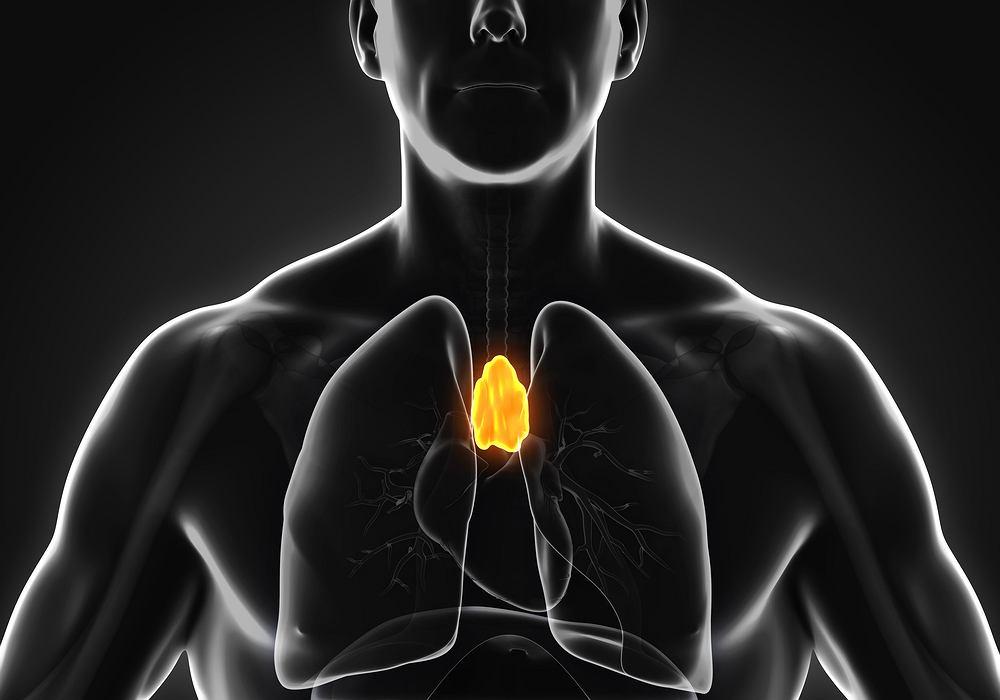 Grasica to niewielki gruczoł, który wchodzi w skład układu odpornościowego.