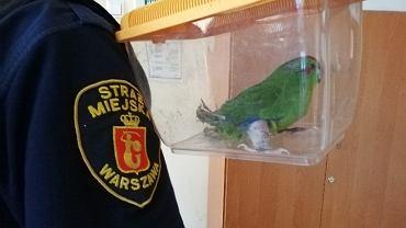 Do mieszkania na Mokotowie wleciała papuga z noga w gipsie