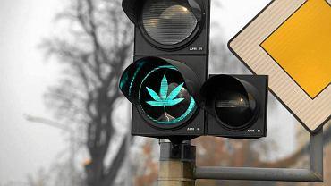 """RP zaproponuje możliwość otwierania """"klubów konopnych"""", w których można byłoby legalnie uprawiać i palić marihuanę"""