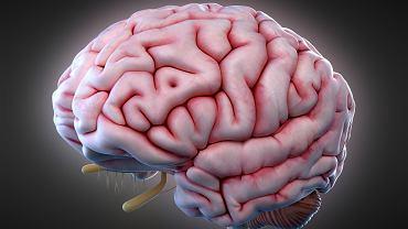 Istota biała w mózgu