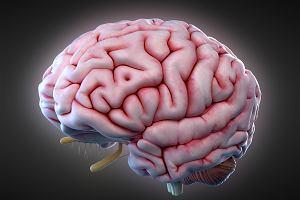 Istota biała mózgu: za jakie funkcje odpowiada?