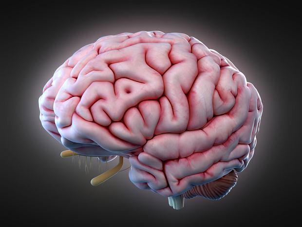 erekcja po wstrząsku mózgu