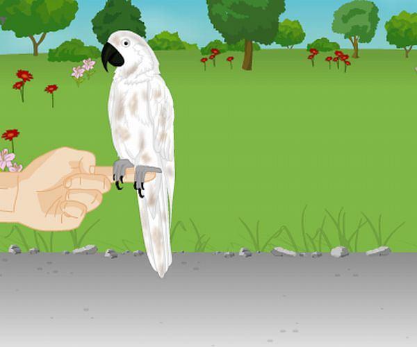 Czy ktoś chciałby kupić tego ptaszka?