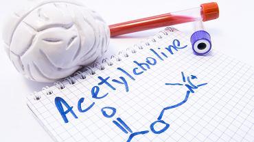 Acetylocholina odpowiada za niektóre procesy pamięciowe, wpływa na pracę serca, a także kontroluje funkcjonowanie układu pokarmowego