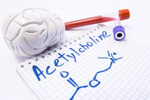 Acetylocholina - co to takiego i jaką funkcje pełni w organizmie człowieka?