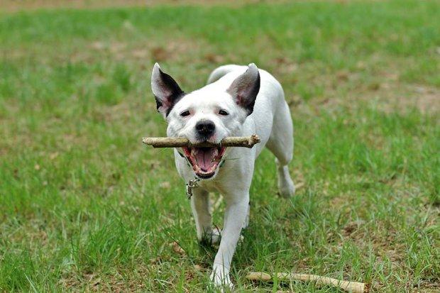 Pies ze schroniska w Milanówku