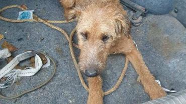 Pies porzucony przez 61-letniego właściciela.