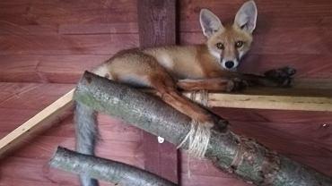 Ekostraż otworzyła ośrodek rehabilitacji zwierząt chronionych