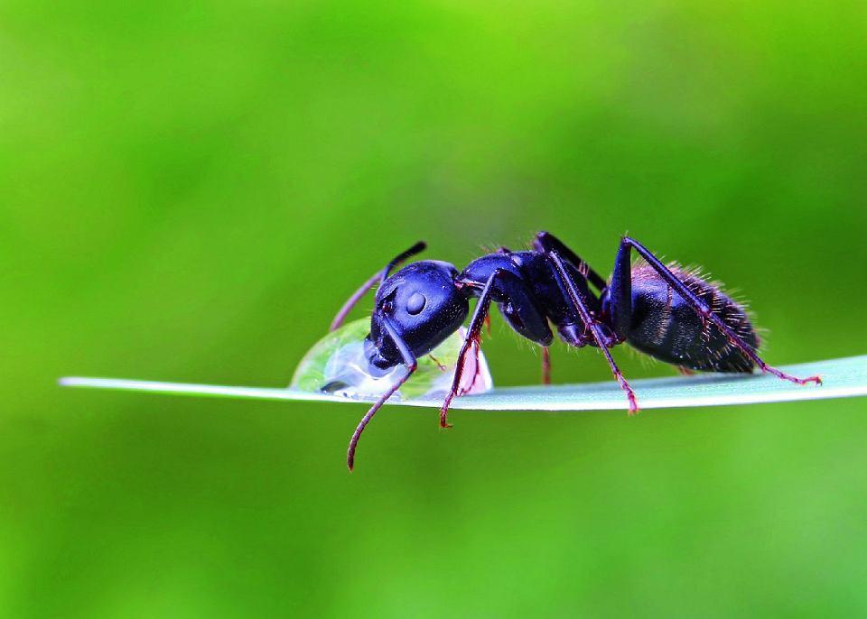 Mrówki Jak Pozbyć Się Mrówek Z Domu Ogrodu I Tarasu