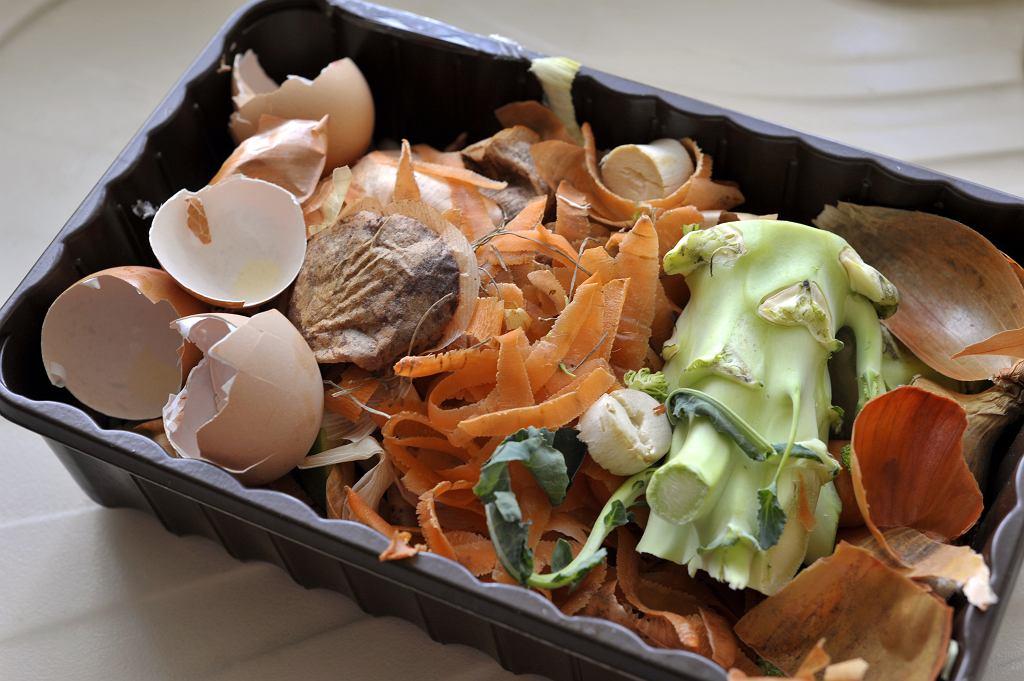 Polacy rocznie wyrzucają ok. 2 mln ton żywności, co daje nam niechlubne piąte miejsce spośród wszystkich krajów Unii Europejskiej