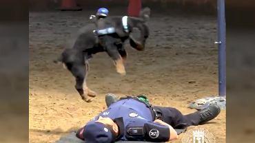 Pies reanimuje policjanta