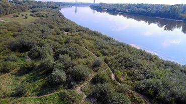 Dziki, prawy brzeg Wisły w Warszawie