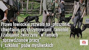 """""""Szkolenie"""" psów myśliwskich"""