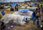 Unia Europejska chce wypłacić po 2 tys. euro migrantom w Grecji, jeśli wrócą do swoich krajów