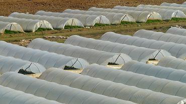 Stosowanie wszelkich wspomagaczy w rolnictwie ekologicznym jest surowo zabronione (fot. Pixabay.com)