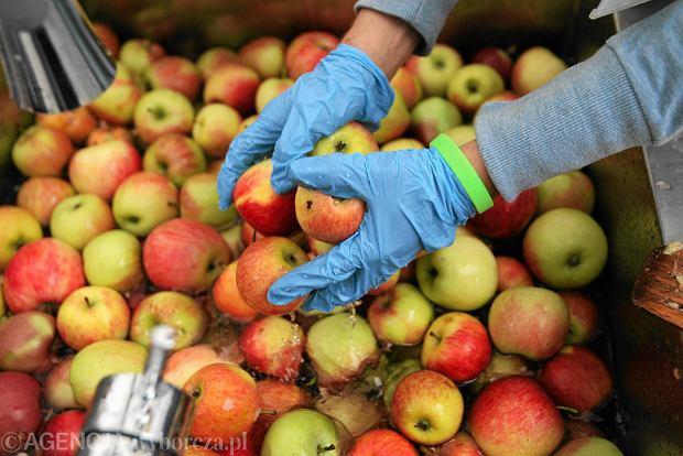 Finansowy trik Samcika: Jak tanio kupić jabłka?