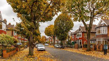 Stare, rozłożyste drzewa w londyńskiej dzielnicy Chiswick. W Warszawie bardzo trudno znaleźć podobne okazy wzdłuż ulic.