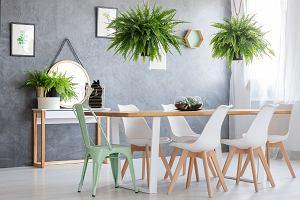 Rośliny oczyszczające powietrze - naturalny sposób na poprawę jakości powietrza w mieszkaniu
