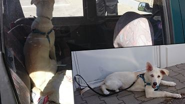 Zwierzę uwięzione w samochodzie