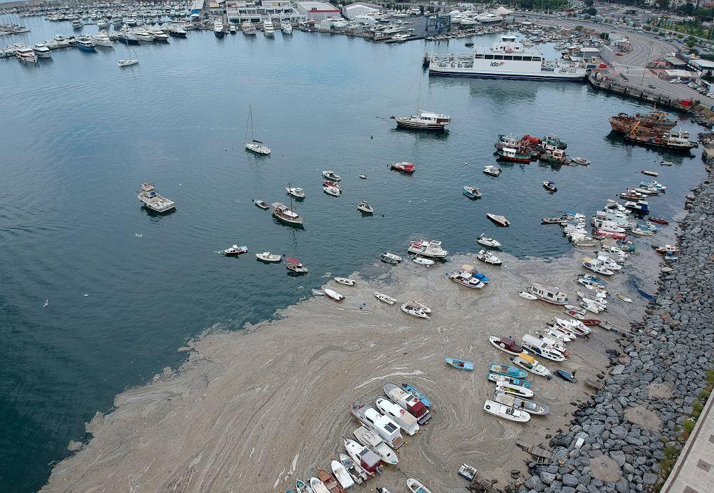 Port Pendik w Stambule. Morze Marmara pokryła gruba warstwa tzw. śluzu morskiego