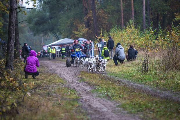 start zaprzęgu Krzysztofa Janeckiego z 15 psami