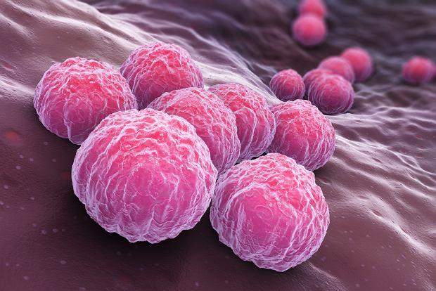 Będzie szczepionka, która chroni przed chlamydiozą. Naukowcy wykonali pierwsze testy