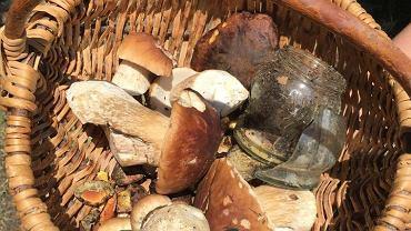 Coraz więcej osób zbierają grzyby zbiera także śmieci