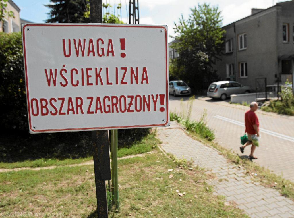 Wścieklizna na Mazowszu. Wojewódzki Inspektorat Weterynarii potwierdził dotychczas 40 przypadków - zdjęcie ilustracyjne