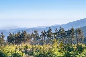 Alternatywa dla wakacji w Łebie i Zakopanem. Proponujemy 3 miejsca na wakacje w Polsce, które cię nie zawiodą
