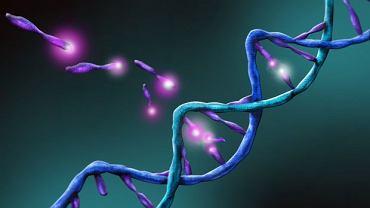 Mutacja genetyczna sprawia, że układ immunologiczny nie działa prawidłowo i zaczyna zwalczać również zdrowe komórki