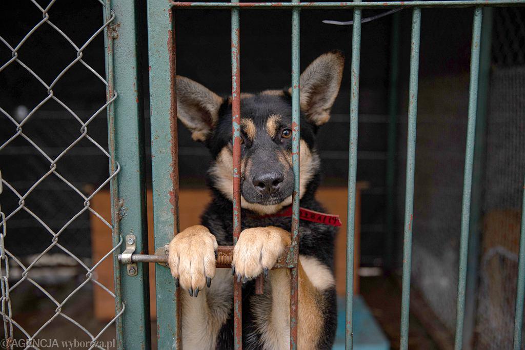 Suczka Ina też czeka na swój dom. Schronisko na Paluchu