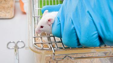 Testy laboratoryjne na zwierzętach