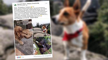 Pies uratował innego psa podczas spaceru. Czworonóg spędził ponad miesiąc w nieczynnym szambie