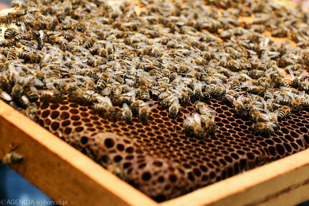 Setki pszczół nie żyje, ktoś zalał ropą ule. Policja poszukuje sprawców