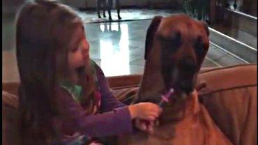 Mała dziewczynka bada psa