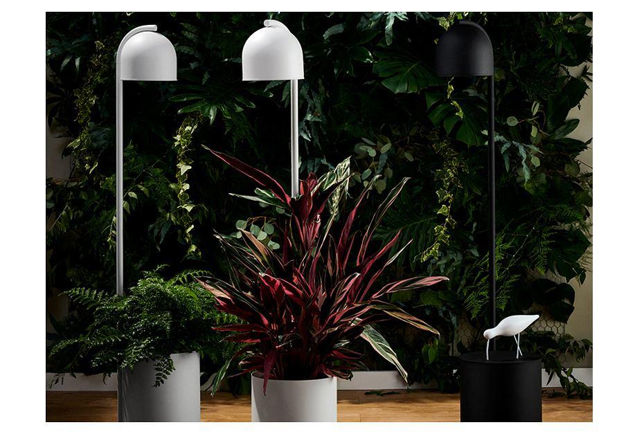 Kaspa - Botanica lampa z miejscem na roślinę