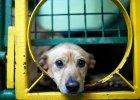 Obrońcy zwierząt: prawo jest nieskuteczne. Jakie proponują zmiany?