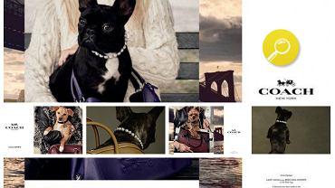 Kampania 'Coach Pups'- przegląd akcesoriów z nadrukami zwierząt