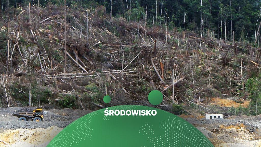 W 2020 roku zniszczono na świecie lasy o powierzchni porównywalnej do Holandii