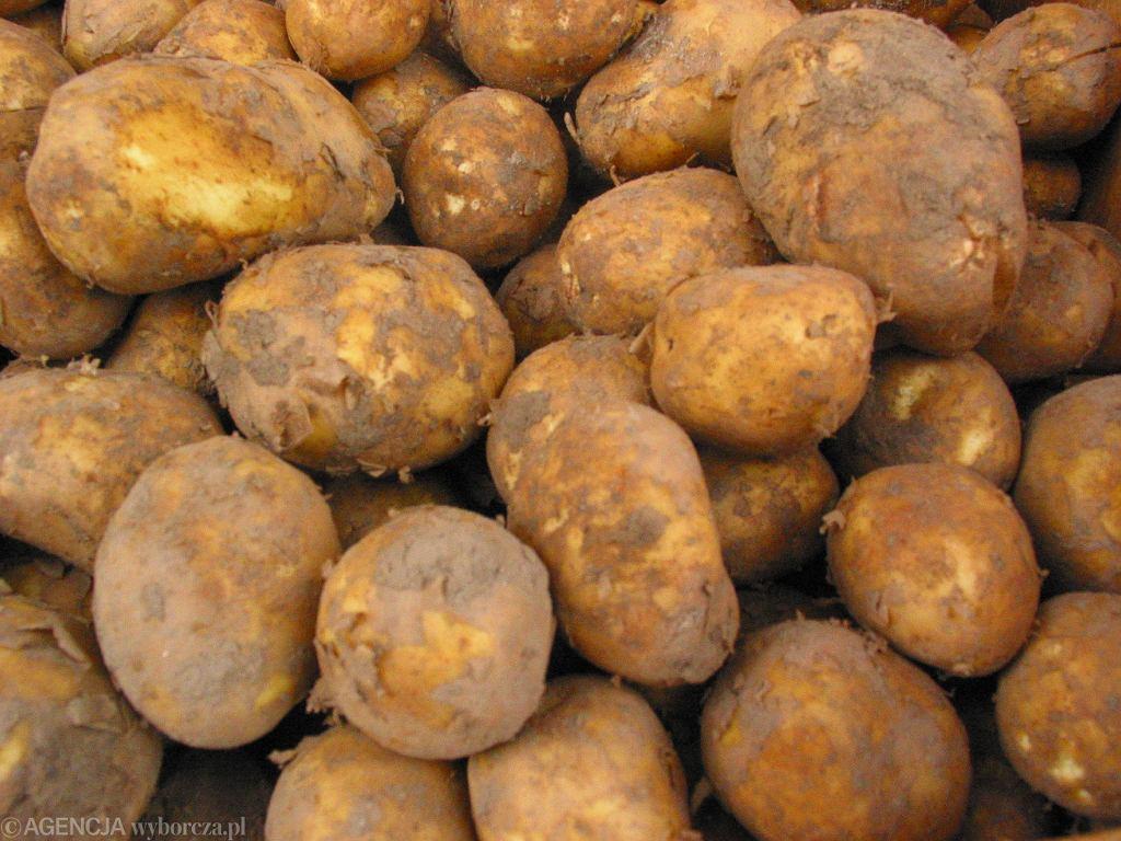 Skąd pochodzą ziemniaki?