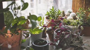 Rośliny trujące