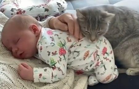 Kot położył się na niemowlaku. Nie chciał mu zrobić krzywdy