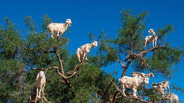 Zwierzęta wykorzystywane przez przemysł turystyczny