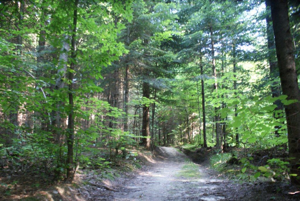 Las w Gorajowicach
