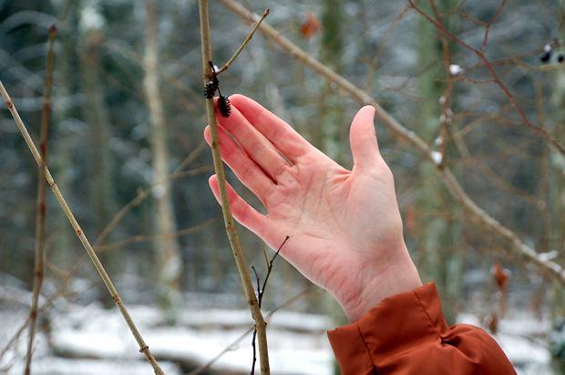 Dobroczynne efekty kąpieli leśnych to zasługa wydzielanych przez drzewa naturalnych substancji, tzw. fitoncydów (fot: NK)