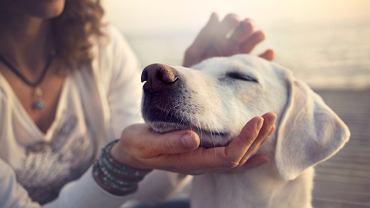 Parawiroza u psa - jak się objawia?