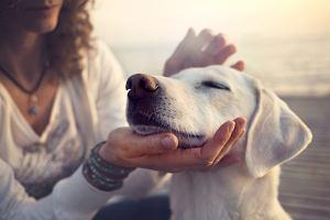 Parawiroza u psa- co to za choroba i czy występuje także u ludzi? [objawy, leczeni, diagnoza]