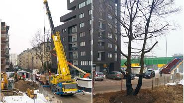 Firma deweloperska zamiast wyciąć drzewo, przesadziła je